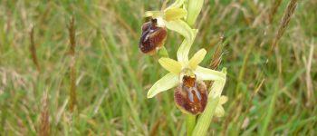 Sortie nature : orchidées en retz Les moutiers en retz