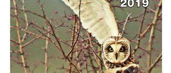 Photographie animalière 2ème festival à brasparts Brasparts