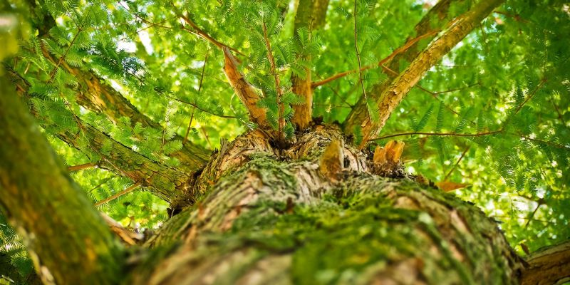 Bain de forêt et sylvothérapie : la danse du vivant