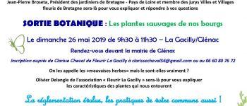 Sortie botanique : « les plantes sauvages de nos bourgs » Glénac