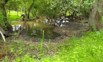 Sortie nature : regard nature sur le Marais de l\Ile